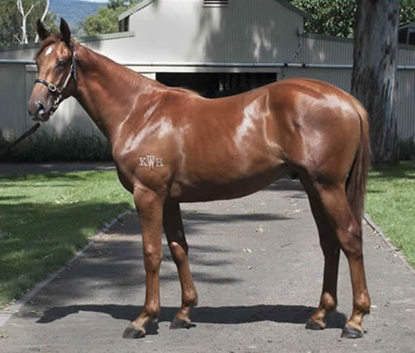 Vow and Declare as a yearling