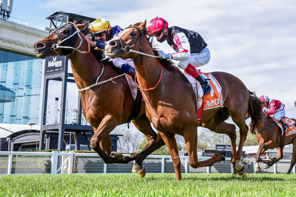 Wild Planet does enough in the Moonga Stakes (Pat Scala /Racing Photos)