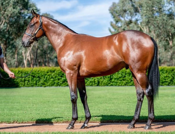 Wild Ruler a $525,000 Inglis Easter yearling
