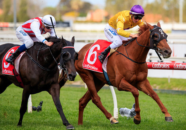 Wolfe off to the Caulfield Cup