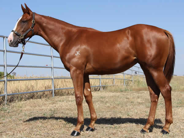 Written With Ease made $120,000 as a yearling - click for more information.