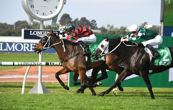 Wu Gok wins the Listed Winter Cup - image Steve Hart