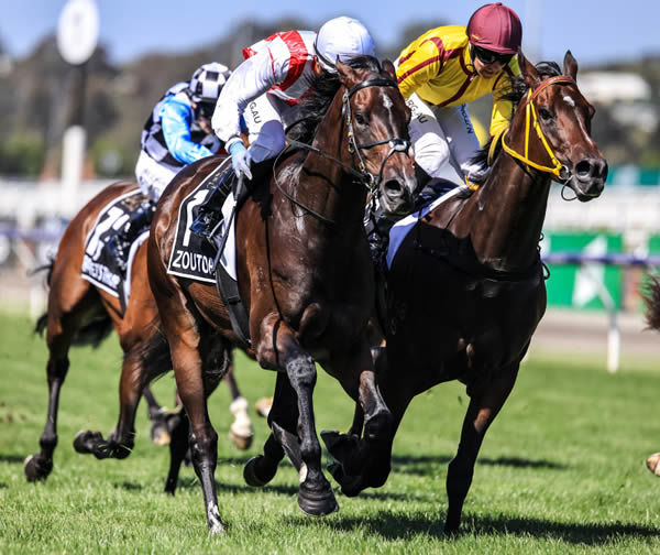Zoutori edges out Indian Pacific to give Zoustar a G1 quinella at Flemington - image Grant Courtney