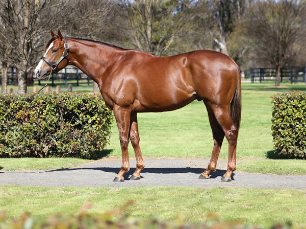 Anders is a Premium stallion, click for more information.