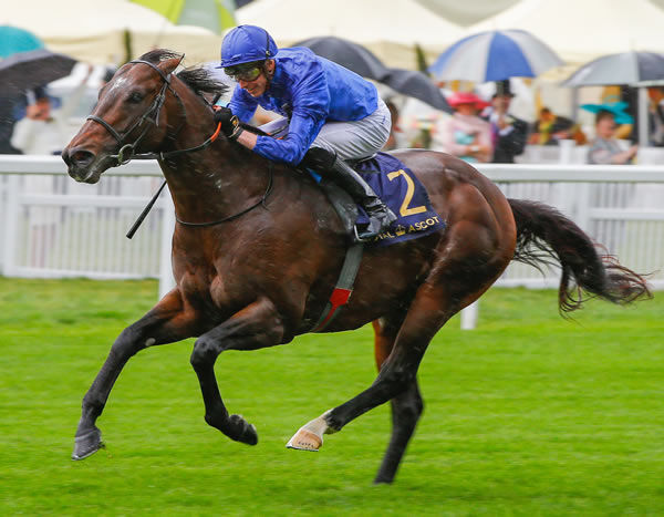 Blue Point is a champion son of Shamardal