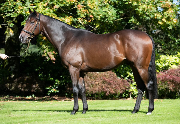 Kingman's star son Calyx stands at Coolmore Australia this spring - click to watch him parade