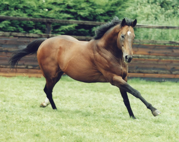 Danehill won the Australian General Sires Title on nine occasions
