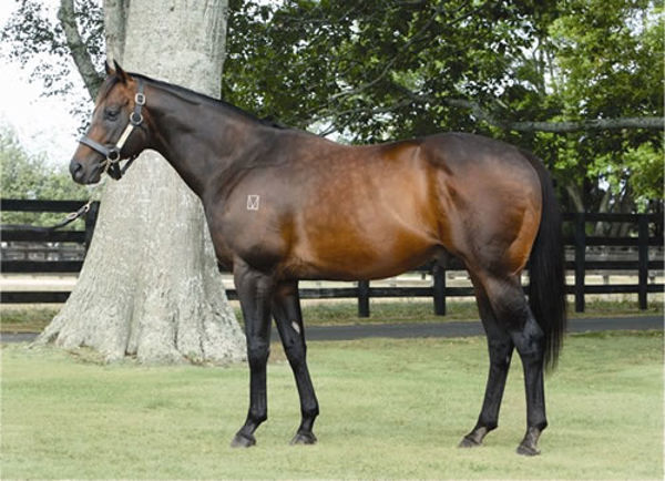 Darci Brahma is a quality sire with the stats to back him up.