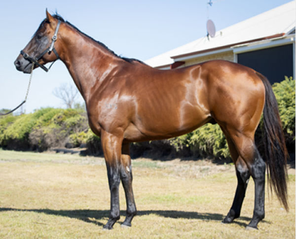 Ducimus was the most poplar first season sire in WA in 2019.