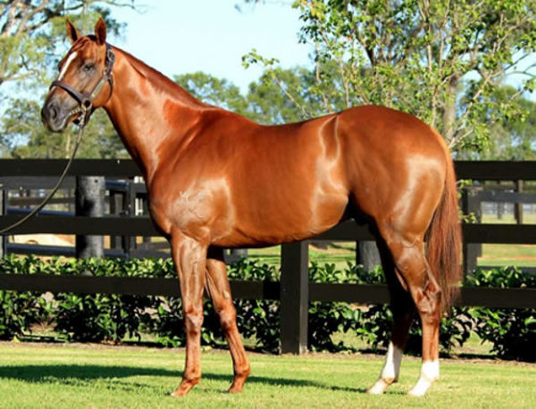 Eurozone stands at Bellereve Stud near Canberra