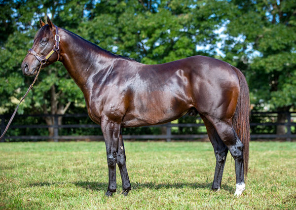 Exceedance has let down into a magnificent stallion.