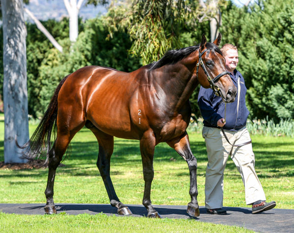 Coolmore's evergreen Fastnet Rock sired the George Ryder Stakes winner Dreamforce as well as the Rosehill Guineas runner Prince Fawaz and Birthday Card Stakes second Connemara