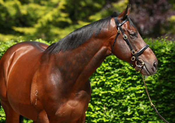 Avantage is a star performer for champion sire Fastnet Rock
