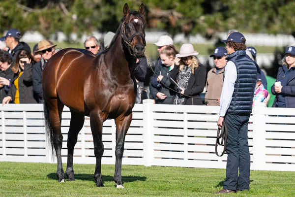 Foxwedge stands at Woodside Park - click to watch him parade