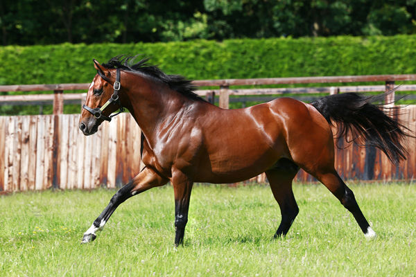 Frankel gets his first winner of the RSL Sir Brudenell White HCP at Ararat - image Juddmonte