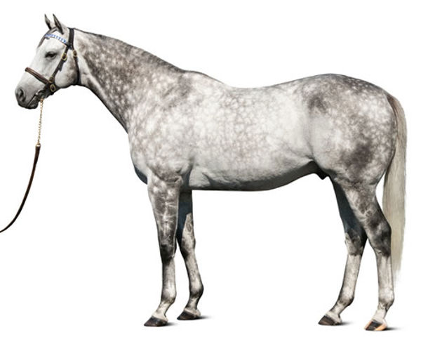 Frosted (USA) - click for more information.