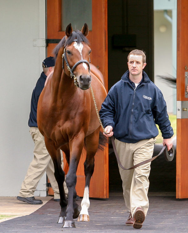 World champion sire Galileo has a yearling in the sale.