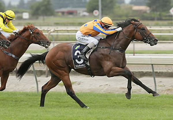 Heroic Valour was an outstanding 2YO for Te Akau Racing.