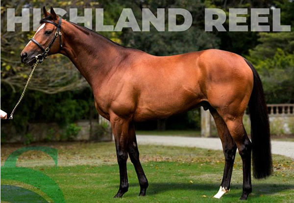 Highland Reel stands at $16,500