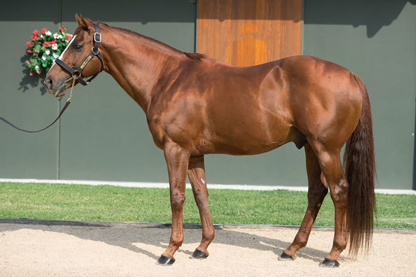 Husson is a Premium stallion, click for more information.