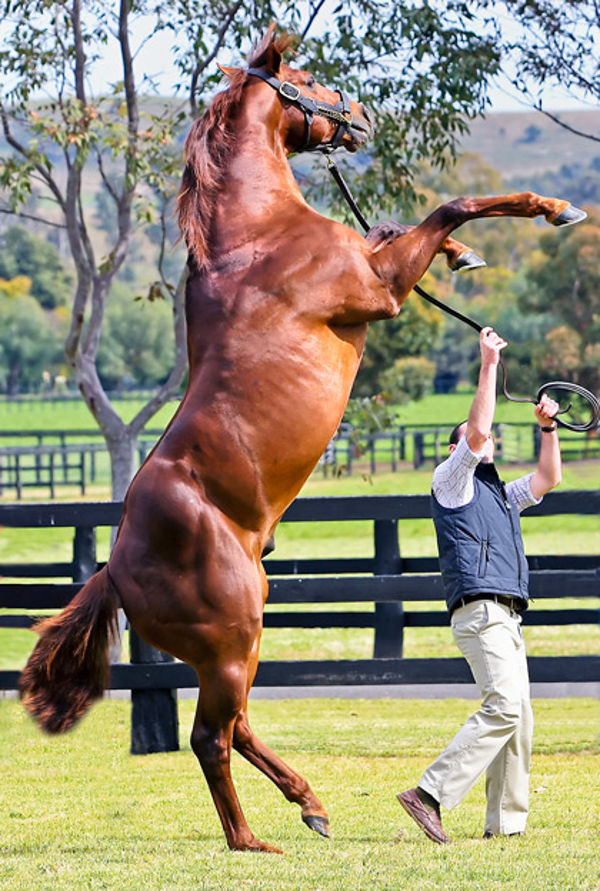 Hussonet an important broodmare sire (Mark Smith)