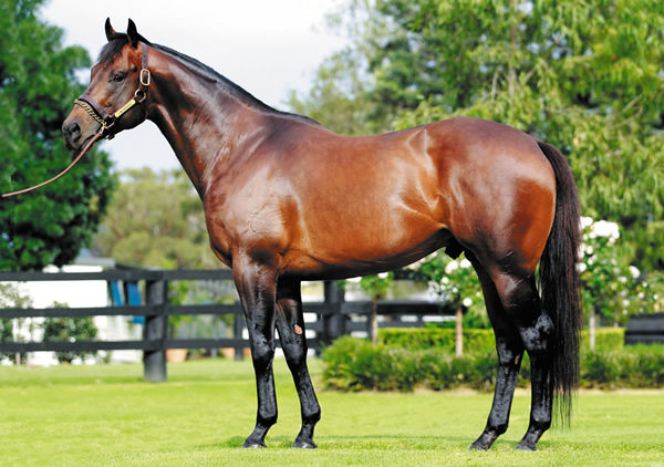 I Am Invincible - from humble beginnings, a champion sire!