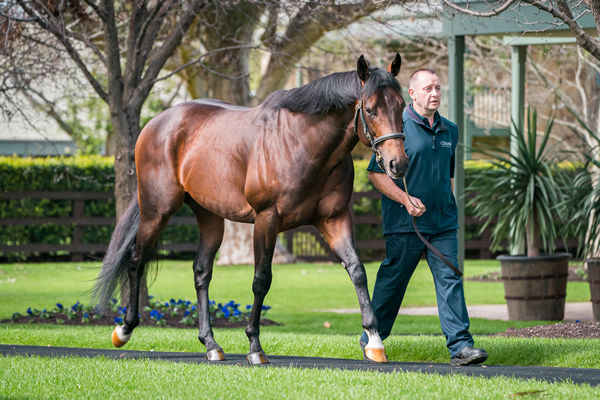 Standing at Coolmore this spring, Magna Grecia is a half-brother to st Mark's Basilica