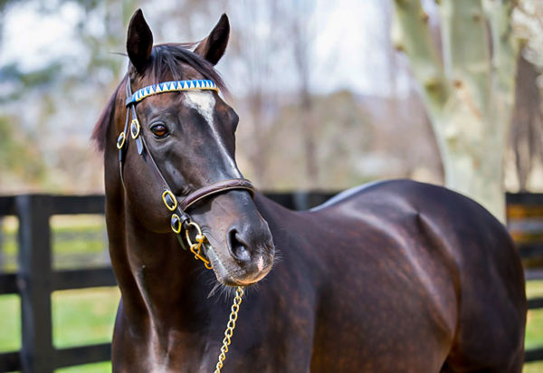 Medaglia D'Oro is the sire of Group I winner Astern and also Tangier.