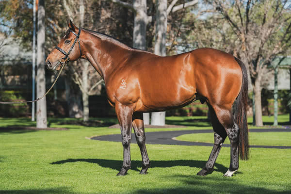 Merchant Navy is a Premium stallion, click for more information.