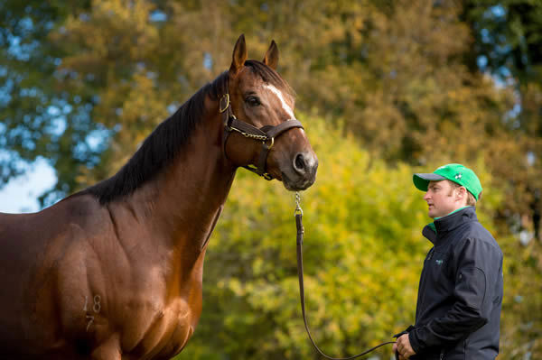 Needs Further is back at Armidale Stud this spring - images Sharon Chapman