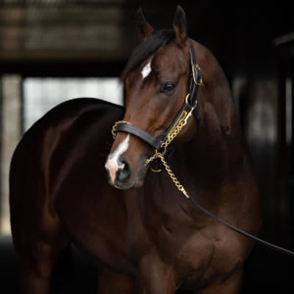 Omaha Beach stands at a fee of $22,000