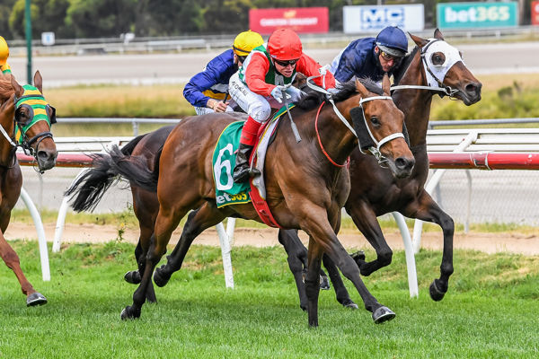 Pancho pounces in Kilmore Cup (Brett Holburt/Racing Photos)