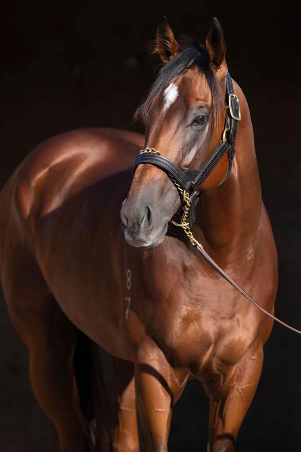 Kia Ora Stud's glorious young Redoute's choice stallion Prague, click for more information.