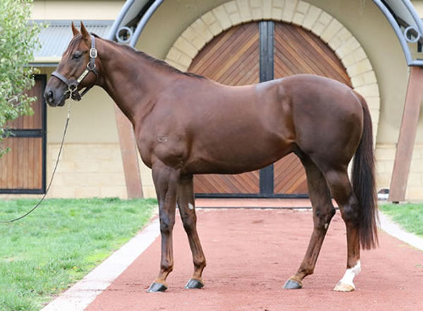 The fortunes of young sire Rich Enuff have risen in recent months.
