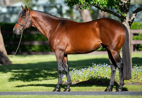 For the past two seasons Rubick has been the busiest sire in Australia.
