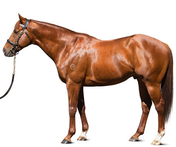 Sepoy stands at Darley Victoria at a fee of $4,400.