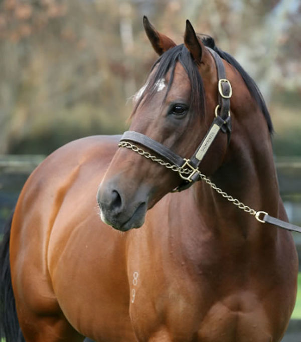 Shamexpress is the sire of Hard Press