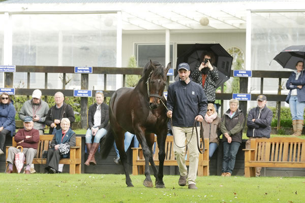 Soleseifei is the tenth SW for Melbourne Cup winning sire Shocking