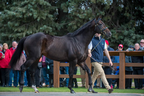 Sioux Nation is the first son of Scat Daddy to stand in Victoria