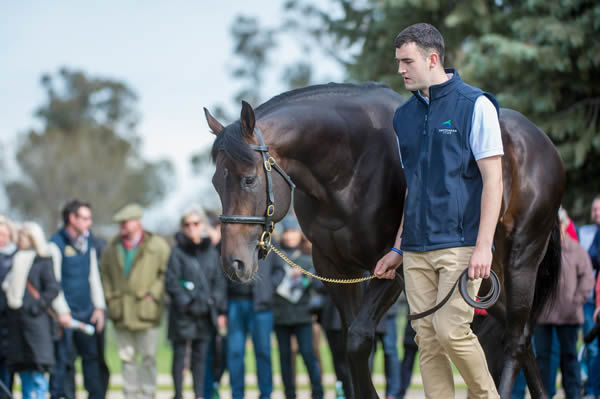 Sioux Nation was the busiest flat sire in Britain and Ireland for 2019