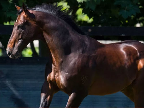Smart Missile is the sire of Smart Coupe