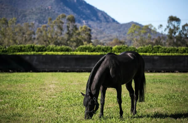 So You Think can enjoy some downtime now after covering his biggest ever book of 261 mares in 2020.