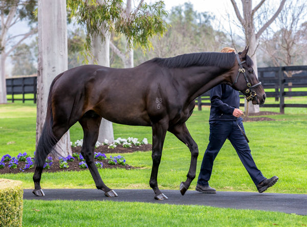So You Think has made a fast start to the season with six stakes winners image Mark Smith