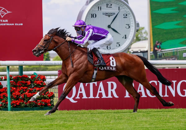 St Mark's Basilica has been retired to stud at Coolmore.
