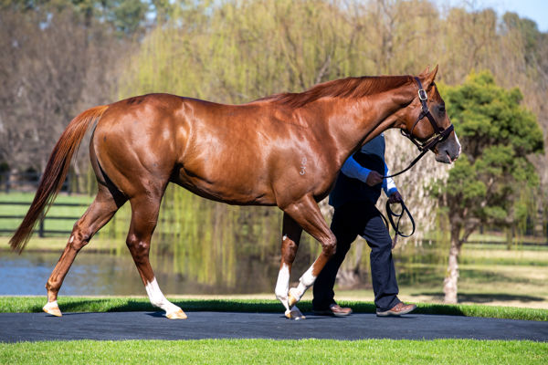 Star Turn stands at Vinery this spring at a fee of $16,500.