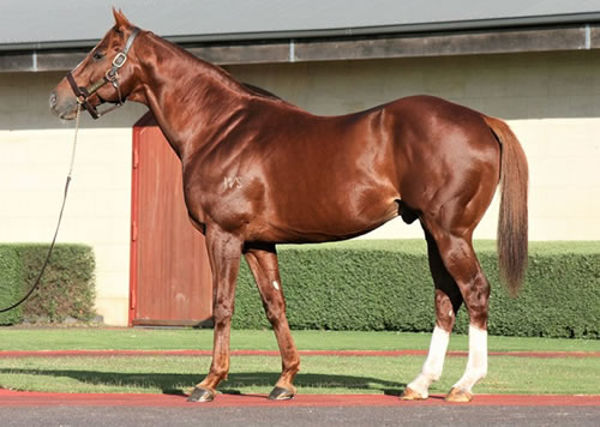 Starcraft is a great value sire that can still get a good result in the sale ring