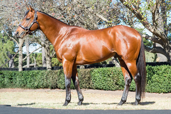 Sun Stud's Thronum has his first yearlings on offer at Inglis Premier.