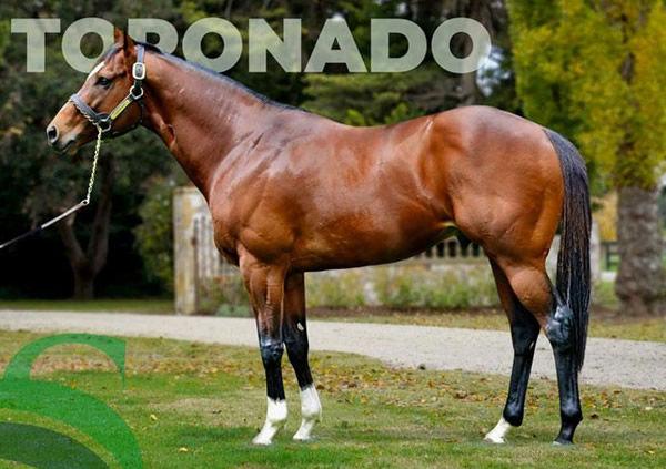 Toronado stands at $49.500.