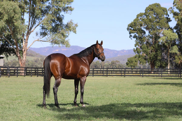 Zoustar is a Premium stallion, click for more information.