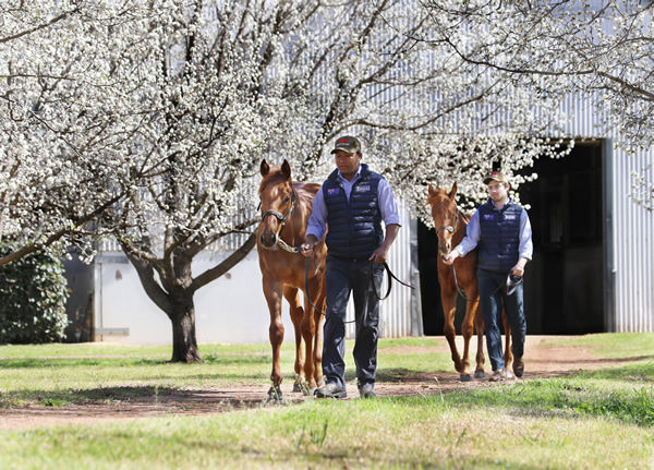 Yearlings by Written By will write  the next chapter of success for his champion sire Written Tycoon.